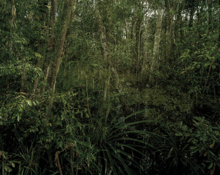 Olaf Otto Becker, PRIMARY SWAMP FOREST 06, LATE DUSK, INDONESIA, 2012
