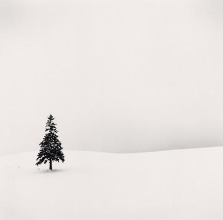Michael Kenna, Lone Tree, Bibaushi, Hokkaido, Japan, 2004