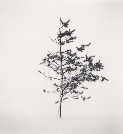 Michael Kenna, Tree Portrait, Study 7, Wakoto, Hokkaido, Japan, 2002
