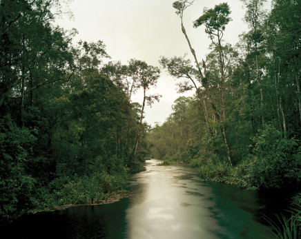 Olaf Otto Becker, PRIMARY SWAMP FOREST 05, LATE DUSK, SOUTH KALIMANTAN, INDONESIA, 2012