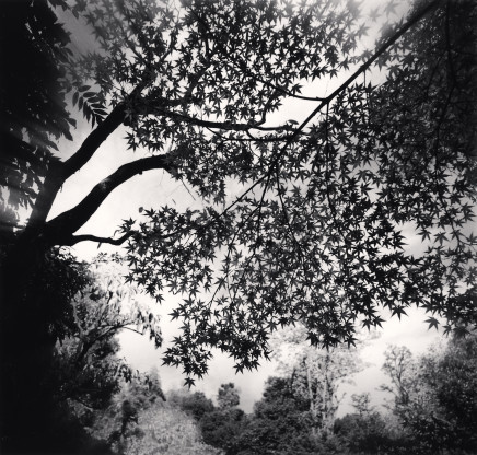 Michael Kenna, Maple Leaves, Elkando Zenrinji, Kyoto, Honshu, 2001