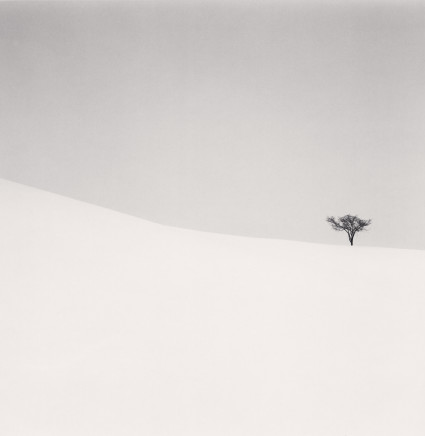 Michael Kenna, Single Tree, Mita, Hokkaido, Japan, 2007