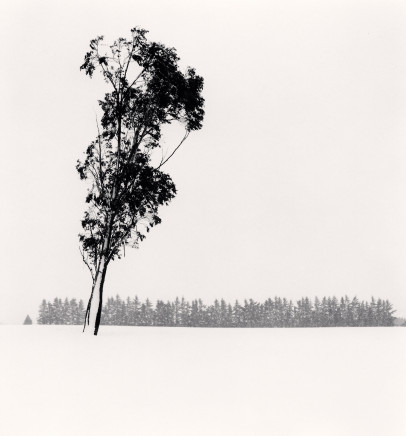 Michael Kenna, Leaning Eucalyptus, Methven, Canterbury, New Zealand, 2013