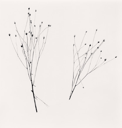 Michael Kenna, Two Winter Stalks, Biei, Hokkaido, Japan, 2013