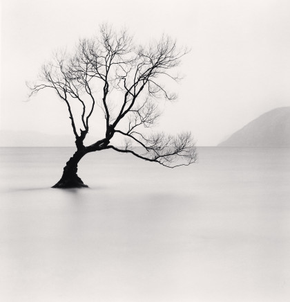 Michael Kenna, Wanaka Lake Tree, Study 1, Otago, New Zealand, 2013