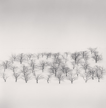 Michael Kenna, Sixty Trees, Nakafurano, Hokkaido, Japan, 2004