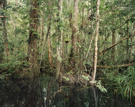 Olaf Otto Becker, PRIMARY SWAMP FOREST 03, BLACK WATER, SOUTH KALIMANTAN, INDONESIA, 2012