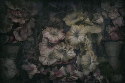 Christopher Thomas, Eternity 18, 2011