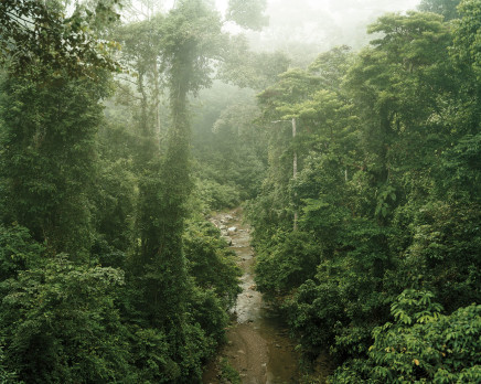 Olaf Otto Becker, PRIMARY FOREST 11, MALAYSIA, 2012