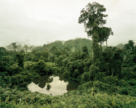 Olaf Otto Becker, PRIMARY FOREST 02, LAKE, MALAYSIA, 2012