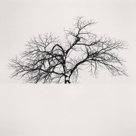 Michael Kenna, Frozen Tree, Omura, Hokkaido, Japan, 2008
