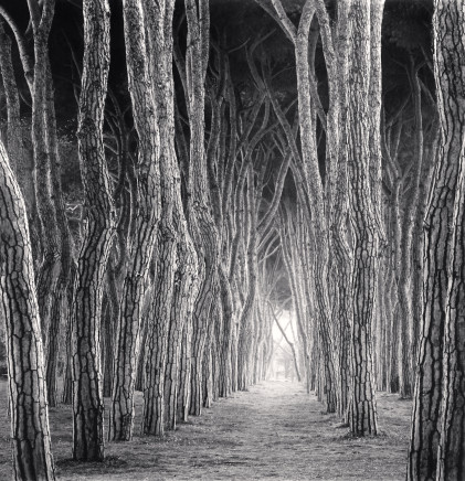 Michael Kenna, Stone Pine Tunnel, Pineto, Abruzzo, 2016