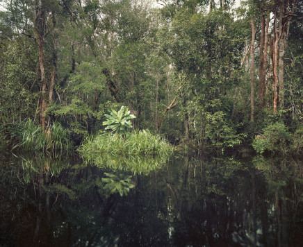 Olaf Otto Becker, PRIMARY SWAMP FOREST 01, BLACK WATER, KALIMANTAN, INDONESIA, 2012