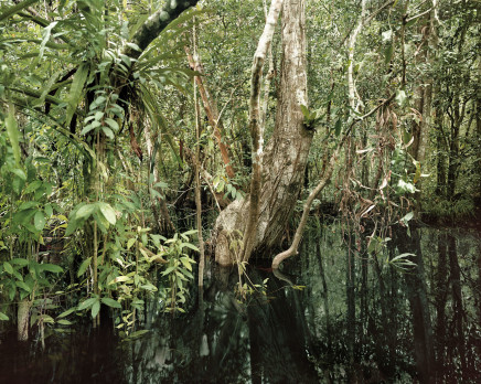 Olaf Otto Becker, PRIMARY SWAMP FOREST 02, BLACK WATER, SOUTH KALIMANTAN, INDONESIA, 2012