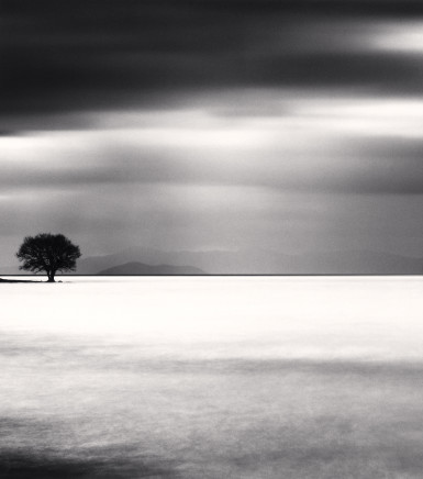 Michael Kenna, Biwa Lake Tree, Study 5, Omi, Honshu, Japan, 2012