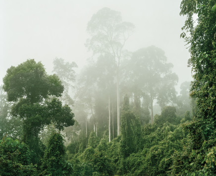 Olaf Otto Becker, PRIMARY FOREST 04, MALAYSIA, 2012