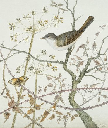 Whitethroat and Meadow Brown