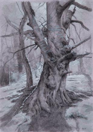 Paul Reid, Tree Study iii, 2018