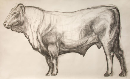 Helen Denerley, Bull drawing, 2019