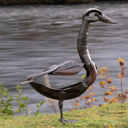 Helen Denerley, Whooper Swan