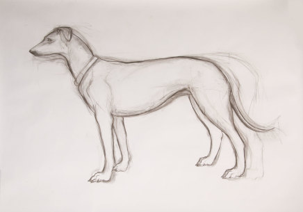 Helen Denerley, Dog drawing, 2019