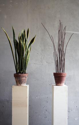Andrea Francolino, A-Biotic vegetable, 2015