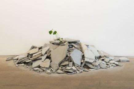 Andrea Francolino, Performance of a Plant, 2014