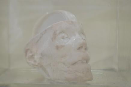 Daniel Malva, Homo sapiens: rostrum, 2013