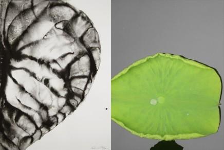 Barbara Edelstein 芭芭拉・愛德斯坦, Reflections • Nature Series No. 18, 2013