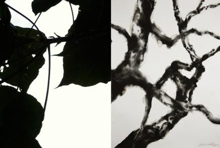 Barbara Edelstein 芭芭拉・愛德斯坦, Reflections • Nature Series No. 19, 2013