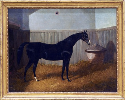 <span class=%22title%22>A black thoroughbred in a loose box</span>