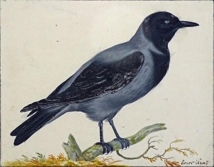 Johannes Bronkhorst, Study of a Crow