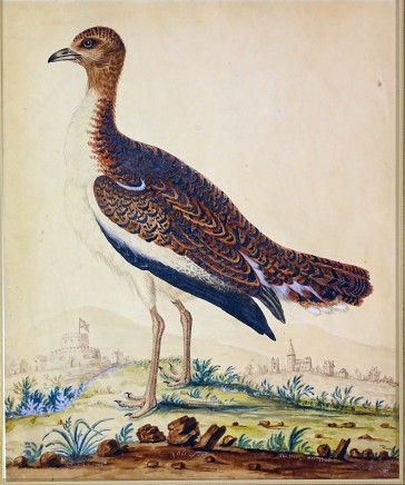 Thomas Denny, A pair of Great Bustard