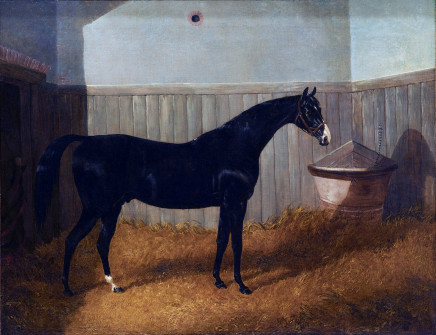 John Frederick Herring, Jnr, A black thoroughbred in a loose box
