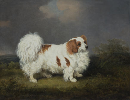 "Henry Bernard Chalon, ""Carlo"" a portrait of a famous spaniel, the property of Mrs Kennedy, 1807"