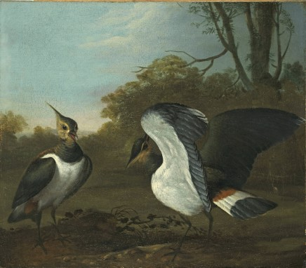 Charles Collins, Lapwings