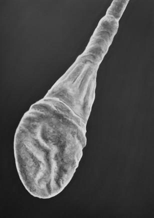 Juan Antonio Olivares, Spermatozoa, 2019