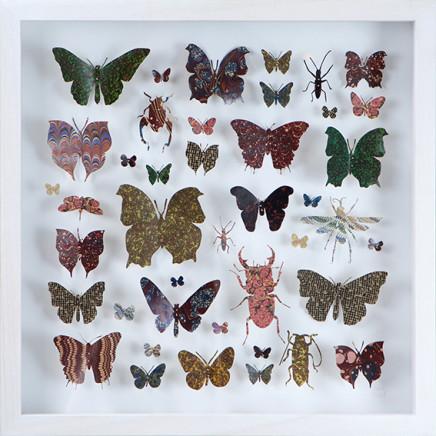 Helen Ward, Lepidoptera 6, 2016