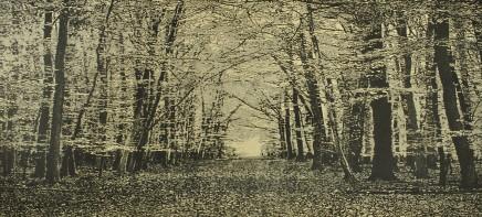 Trevor Price, The Beech Wood II