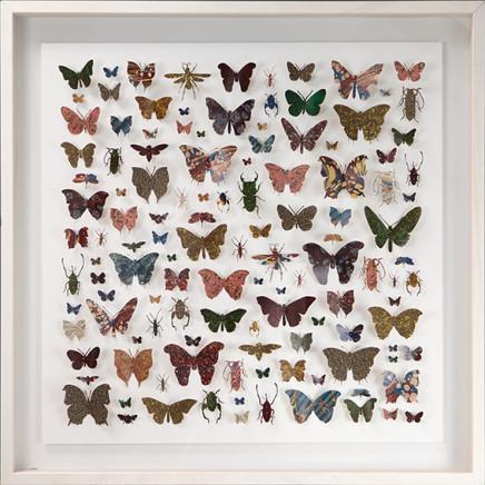 Helen Ward, Lepidoptera 2, 2016