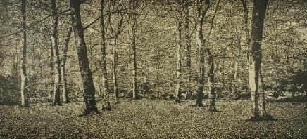 Trevor Price, The Beech Wood, 2020