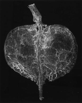 Claudia Fährenkemper, 131-01-1 Plant Seed, 25x, 2001