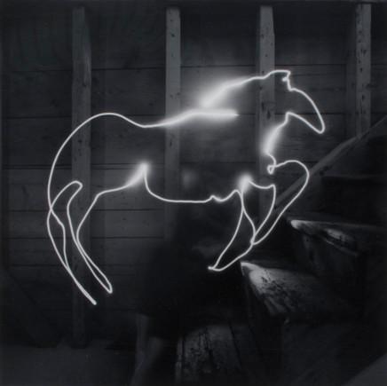 Alison Rossiter, Untitled [Light Animal], circa 1995