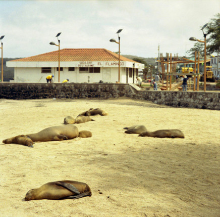 Sarah Anne Johnson, Sealions on the Beach, 2005