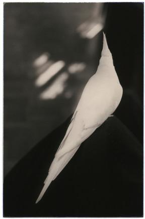 Yamamoto Masao, # 1027, 1987-2018