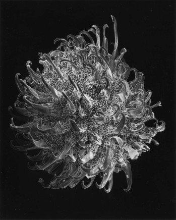 Claudia Fährenkemper, 130-01-5 Plant Seed, 40x, 2001