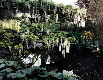 Gabor Szilasi, Grappes de glycines sur le pont japonais, Giverny, printemps, 1998