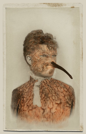 Sara Angelucci, Aviary (Eskimo Curlew/extinct), 2013