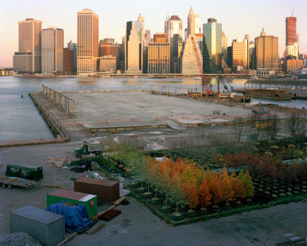 Scott Conarroe, Trees, Brooklyn, NY, 2010
