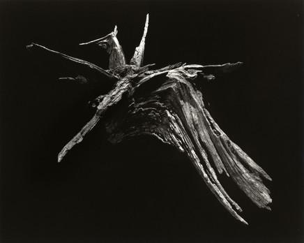 Yamamoto Masao, Pegasus, # 3005, 1987-2018